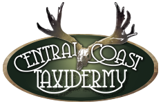 Central Coast Taxidermy